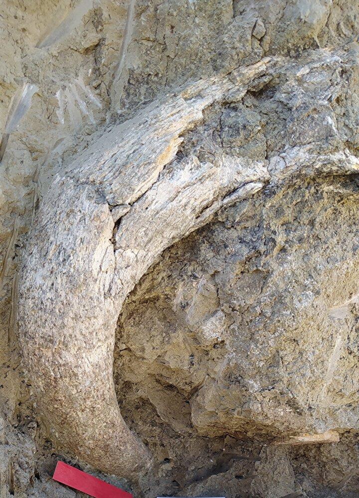 Bölgede gerçekleştirilen araştırmalarda 1,2 milyon ila 9 milyon yıl önce yaşadıkları tahmin edilen 8 farklı fosil memeli türü tespit edildi.