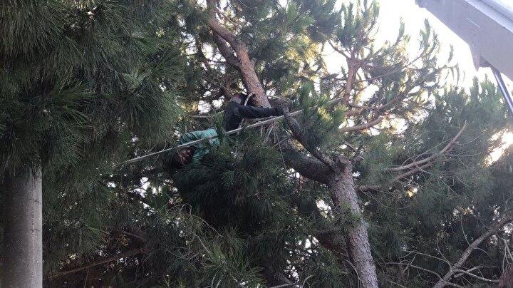 Bir süre kozalak toplamaya devam eden 27 yaşındaki genç, bir anlık dalgınlık sonucu elindeki demir çubuğu kozalak yerine çam ağaçları arasından geçen enerji hatlarına vurunca yaşanan iletim sonucu ağaçta asılı kaldı ve bir anda yanmaya başladı. İnanılmaz olaya şahit olan vatandaşlar dehşet içerisinde 112 sağlık ekipleri, itfaiye, polis ve aydem ekiplerine haber verdi.