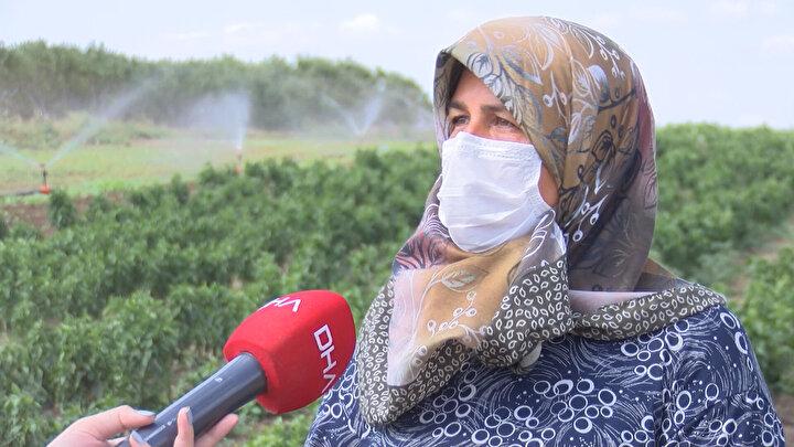 Organik sebze tüketmek isteyenler, İstanbulun her noktasından Kabakça Köyündeki tarlaya gelerek dalından kopardıkları domates, salatalık, biber ve daha pek çok sebze ve meyveyi satın alıyor. Tarlanın sahipleri ise pandemiden önce yalnızca hafta sonu yaşanan yoğunluğun, artık hafta içinde de olduğunu ifade ediyor.  Kabakçadaki tarlaya ailecek sebze toplamaya gelenler oldukça memnun.