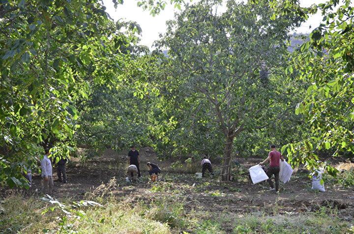 Cevizin stratejik bir ürün olduğunu ifade eden Hantal, Boş arazilerimiz, orman vasfını yitirmiş arazilerimiz var. Ülke olarak ihtiyaç duyduğumuz cevizi neden kendimiz yetiştirmeyelim? Tarım ve Orman Bakanlığına teşviklerinden dolayı teşekkür ediyorum. diye konuştu.