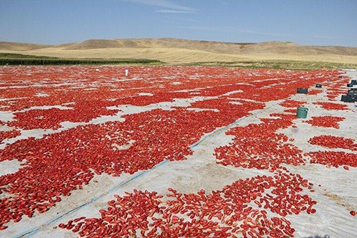 Mürselim, elde ettiği ürünleri spagetti ve pizzalarda sos olarak kullanılmak üzere İtalyaya ihraç etmeye başladı.