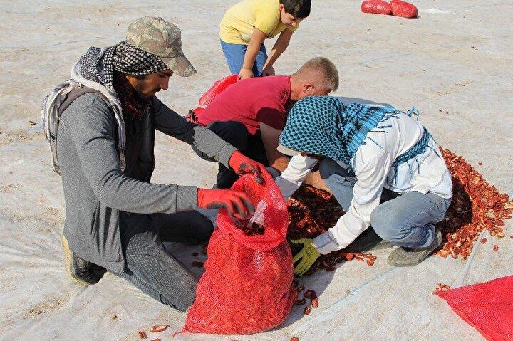 Kurutulmuş domateslerin tarım işçilerine de ekmek kapısı olduğunu dile getiren Mürselim, şöyle konuştu: