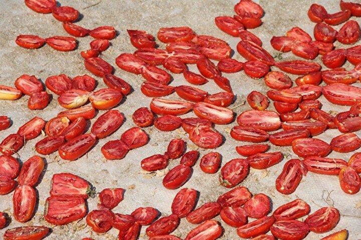 Yüzlerce dönüm arazide ilk denemede 100 ton kurutulmuş domates elde eden Mürselim, gelecek yıl 400 ton ürün hedeflediğini belirterek, Diyarbakır domateslerini dünyaya yayacağını söyledi.