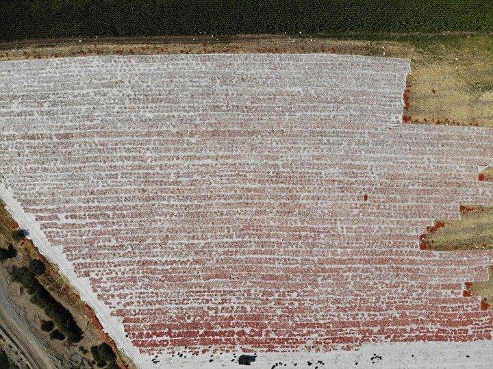 Diyarbakır domatesi kurutularak İtalyan mutfağına girdi. Ege bölgesinde yıllardır çiftçilik yapan İsmail Mürselim, 8 yıl önce Diyarbakıra gelerek 600 dönümlük alanda domates yetiştirmeye başladı.
