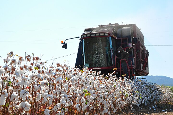 Kumkuyucak Mahallesinde çiftçilikle uğraşan ve aynı zamanda pamuk toplama makinesinin sahibi olan Hüseyin Güç, bu yıl verimlerin genelde iyi olduğunu ve dekar başına 600 kilo verim elde ettiklerini kaydetti.