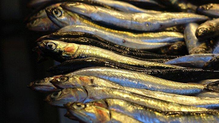 """Şu anda en çok satılan balığın palamut olduğunu dile getiren Balcı, bolluk yaşanmasına rağmen onun da fiyatının yükseldiğini aktararak, """"Bugün 15 liradan satıyoruz. Bugün 15 ama dün 12 buçuktu. Geçen hafta 10 liraya kadar sattık. Bugün biraz yükseldi. Bu balık işi, belli olmuyor. Çok tuttukları zaman düşük fiyata satıyoruz, az tuttukları zaman yüksek fiyata satıyoruz."""