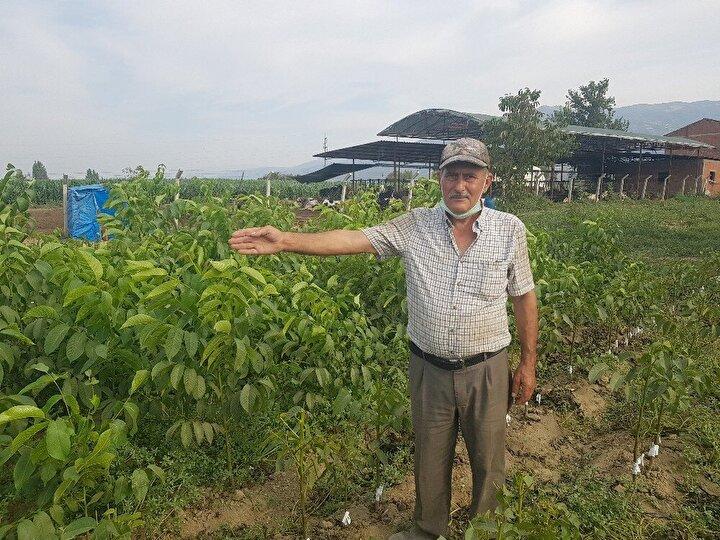 Kısa sürede işlerimi büyüterek bu fidanları ülke genelinde satmaya başladım. Kooperatifler aracılığı ile fidanlarım Azerbaycan ve Özbekistan başta olmak üzere bir çok ülkeye gidiyor. Şuan yanımda çok sayıda işçi çalıştırıyorum ve işlere yetişmekte zorlanıyorum...