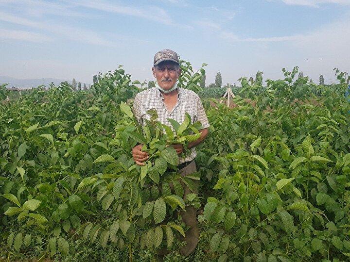 Tire ilçesinde yaşayan 68 yaşındaki çiftçi Ali Osman Öztürk, fidancılık kursunu tamamlayarak belgesini aldı. Öztürk, daha sonrada profesyonel olarak ceviz fidanı yetiştirmeye başladı. Özellikle verimi yüksek yeni tür ceviz fidanlarını aşı yöntemi ile yetiştiren Ali Osman Öztürk, deneme amaçlı başladığı işlerini kısa sürede büyüttü.