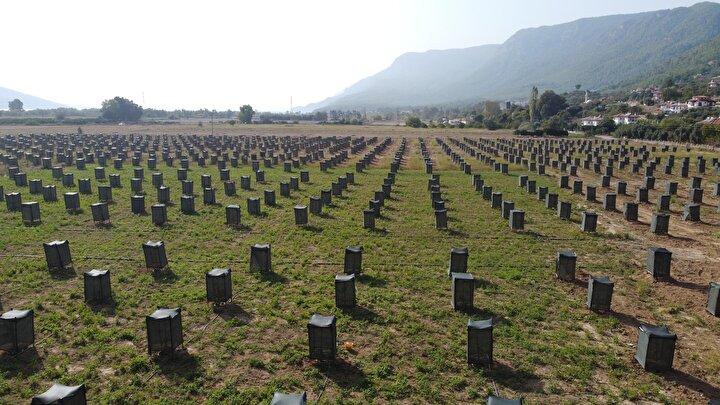 Şahin, önce deneme amaçlı 5 fidan dikti. Diktiği bu fidanlardan beklediği verimi alan Şahin, geçen nisan- mayıs ayları arasında 52 dönümlük arazisine, 800 bin TL harcayarak 1300 avokado fidanı daha diktirdi.