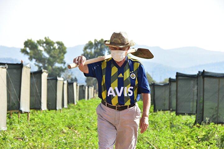 Fenerbahçe Spor Kulübü Yönetim Kurulu Üyesi, iş insanı Turhan Şahin, 5 yıl önce bir sohbet sırasında bahsi geçen Türkiyenin Güney Amerikadan ithal ettiği avokado fidanı konusunda, merak edip, araştırmalar yaptı. Şahin, araştırmalarının ardından Türkiyede avokado yetiştirmek için kolları sıvadı.