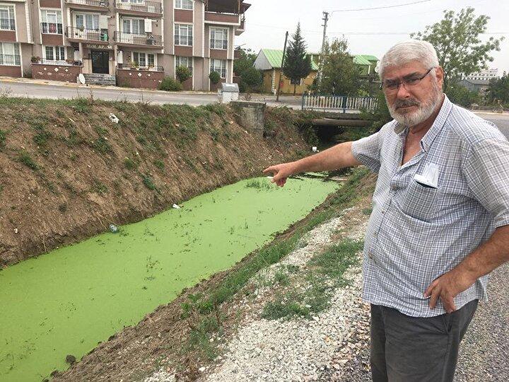 Çevre Mühendisleri Odası Kocaeli Şubesi Başkanı Gökhan Tilki endişe edilecek bir durumun olmadığını belirterek, Derenin renk değiştirmesi alg popülasyonunun birikmesidir.