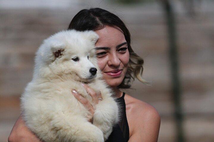 """Korona virüsle birlikte yurt dışından gelen köpeklerin gelmediği ve eldeki hayvanların da yavrulamadığını belirten Mustafa Aydın, """"Sahiplendirilecek köpek bittiği için, bazıları sokaktan bulduğu köpeği bile cins köpek diye satmaya çalıştı. Her konuda olduğu gibi fırsatçılar burada da kendini gösterdi. İnsanlar köpek veya evcil diğer hayvanları sahiplenmeden önce çok iyi araştırmalı. Profesyonel kişiler tarafından yapılan çalışmalara yönelmelidir. Yoksa hem aile, hem de o hayvan büyük eziyet çeker"""" diye uyardı."""