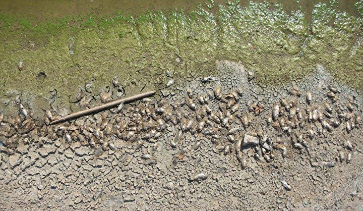 Simge projedeki göletlerde balıklar, kirlilik nedeniyle öldü