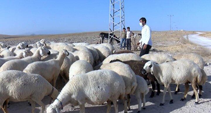 Mustafa Baysız, köy hayatını seçtiğini belirterek, Köyüme duyduğum özlem nedeniyle Kayseriye göç ettim. Bakanlığın sağladığı Genç Çiftçi projesine başvurdum. Başvurum kabul edilince bana 32 dişi, 2 erkek olmak 34 küçükbaş hayvan verdiler. Gecemi gündüzüme katarak hayvanlarıma baktım ve 80den fazla koyunun olduğu sürünün sahibiyim. Hayvanları sevdiğim için şehir yerine köy hayatını seçtim. Akkaraman denilen Kangal ırkı koyunları yetiştiriyorum. İnşallah sürümün sayısını daha da artıracağım.