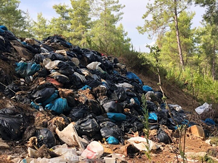 Kaçak kesimin Manavgat Yeniköy ve Şişeler mahallesi arasında bulunan Hayıtlıgür Deresi kenarında 7 yıldır faaliyetlerini sürdüren domuz çiftliği tarafından yapıldığını iddia etti.