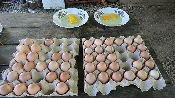 Zamanla tavukların sayısını artıran iki kardeş, bahçelerinin yetersiz kalması üzerine Cincin Mahallesindeki 10 dönüm arazi üzerine Nar Bahçesi adını verdikleri bir tavuk çiftliği kurdu.