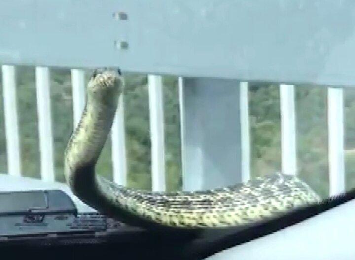 Fırıncıoğulları otomobiliyle seyir halindeyken, Karacabey ilçesine geldiğinde kaputtan yılan çıktığını gördü.