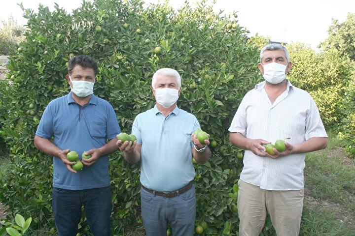 Türkiye İstatistik Kurumu (TÜİK) verilerine göre de Eylül ayında fiyatı en çok düşen ürün limon oldu.