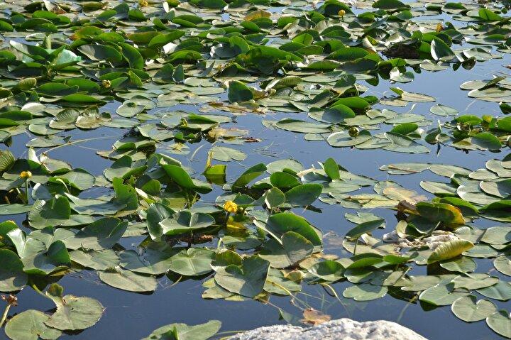 Adalar Mahalle Muhtarı Halil Açık, gölün bir an önce temizlenmesini istedi.