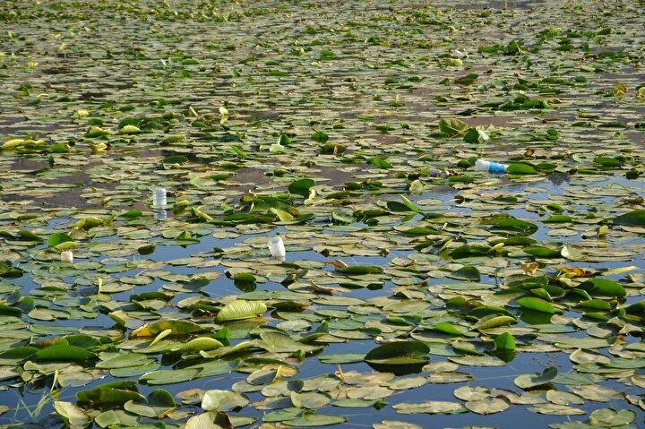 Göle piknik yapmak ve balık tutmak için gelenler, çöplerini atarak büyük oranda kirlilik yaratırken, doğa severler ise nilüferlerin daha da azalmaması için yetkililerden yardım istedi.