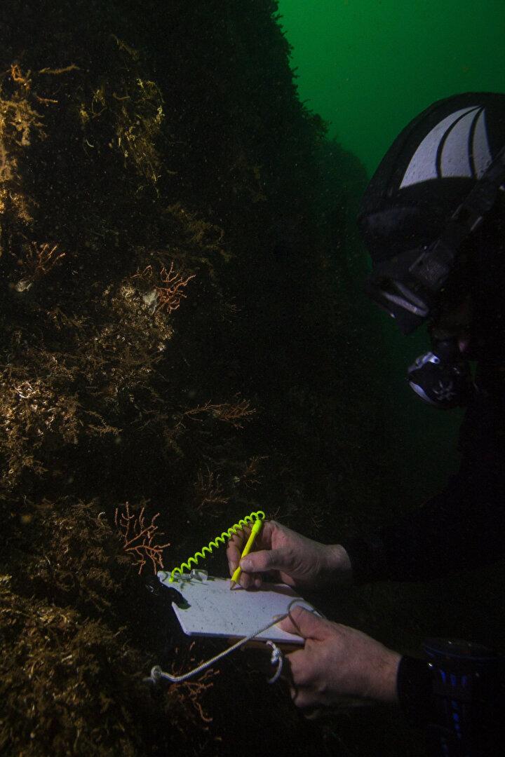 Ekipte yer alan İsmail Cem Odabaşı ve Ferhan Coşkun da çalışmaları adım adım fotoğraflıyor, kaydediyor. Bütün bu çalışmalar ortalama 10 kişilik bir dalgıç ekibi tarafından yapılıyor.