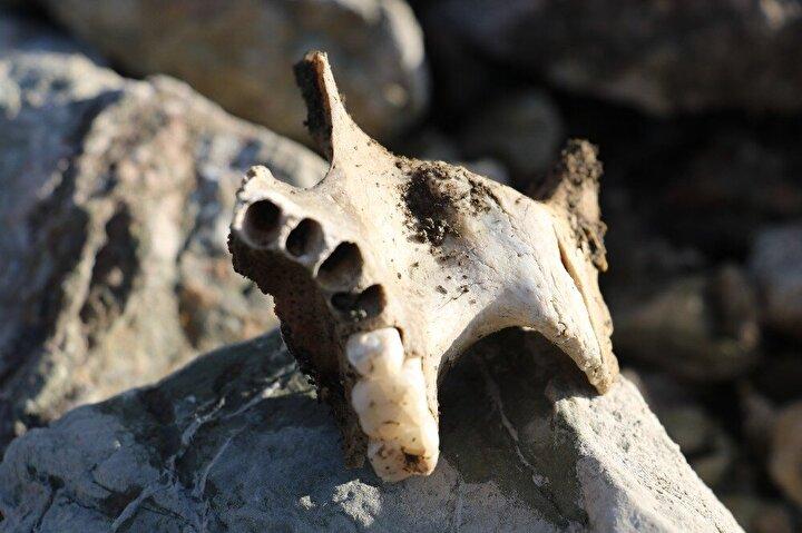 Maden köyünün mezarlığıdır. O kemikler Maden köyünün eski mezarlığına ait rahmetli olanların kemikleri. Tabi önceden böyle bir şey yoktu. Dalgaların vurmasıyla su toprağı almış sonrasın taşlar yüzeyde kalmış ve böylelikle toprağı gittiği için insanların kemikleri yüzeye çıkmış. Su dolunca oraya gitme lüksümüz yok. Uzaktan dua ediyoruz...