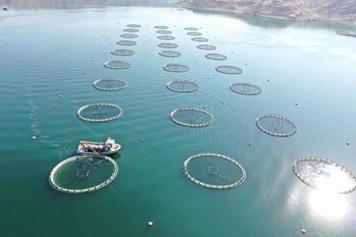 Vatandaşlar tarafından 'yerli somon' olarak bilinen ama Tarım ve Orman Bakanlığı Balıkçılık ve Su Ürünleri Genel Müdürlüğü'nün kararıyla 'Türk somonu' olarak raflardaki yerini alan somon balığı üretimine Kayseri'de tüm hızıyla devam ediliyor. Omega-6 açısından Norveç somonuna göre daha zengin olan Türk somonu, 'Kayseri'nin denizi' olarak adlandırılan Yamula Barajı'nda 528 da. alanda kurulu 14 bin 50 ton kapasiteli 16 işletmede üretiliyor. 2019 yılında 193 ton, 2020 yılında bin 400 ton somon balığı üretimi gerçekleştirilen tesislerde, önümüzdeki yıllarda üretimin 2 bin 500 tona çıkarılması için gerekli planlamalar yapıldı.