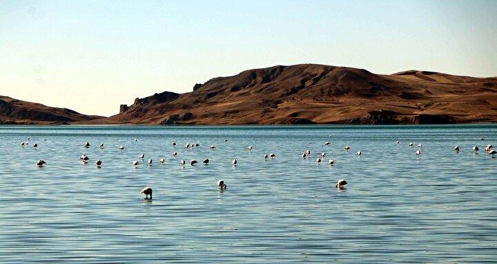 Flamingoların önemli konaklama merkezi olan Erçek Gölü sonbaharda da ziyaretçi akına uğradı. Birçok doğa tutkunu ve fotoğrafçı bölgeye gelerek, flamingoların eşsiz görüntülerini kayıt altına aldı.
