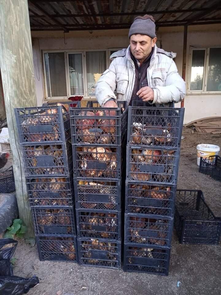 Çanakkalenin Bayramiç ilçesinin Alakeçi köyünde mantar alımı yapılmaya başlandı. Köye gelen mantar toptancıları, halk arasında çörek mantarı veya bolet mantarı isimleriyle de bilinen ayı mantarını, kilosunu 20 ile 25 TL arasında fiyatla alıyor.