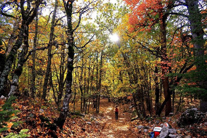 Kasnak meşesinin, Türkiyede münferit olarak birçok ilde görüldüğünü, ancak bir orman olarak sadece Eğirdirde bulunduğunu belirten DKMP 6ncı Bölge Müdürü Mahmut Temel, birincil önceliklerinin tabiatı koruma alanı statüsündeki bu ormanı korumak olduğunu söyledi. Temel, kasım ayı başından itibaren akağaçlarla başlayan ve ilerleyen günlerde de kasnak meşeleri ve alandaki diğer ağaç türleriyle devam eden sonbahar sürecinde muhteşem güzellikler oluştuğunu kaydetti.