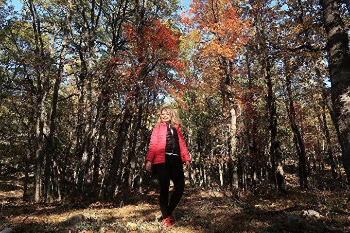 Hazan mevsiminin tüm renklerinin yer aldığı doğa harikası orman, Eğirdir Gölü ile Kovada Gölü arasında yer alıyor. 1987 yılında tabiatı koruma alanı ilan edildikten sonra, yöre halkının da desteğiyle korunan orman, özellikle sonbahar mevsiminde yoğun ziyaretçi çekiyor.