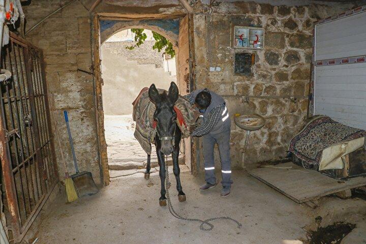 Mardinli iş insanı Mehmet Yertum da, kendini bildi bileli eşeklerin temizlik işlerinde yardımcı olarak kullanıldığını belirterek, Belediyenin kadrolu eşekleri bunlar.