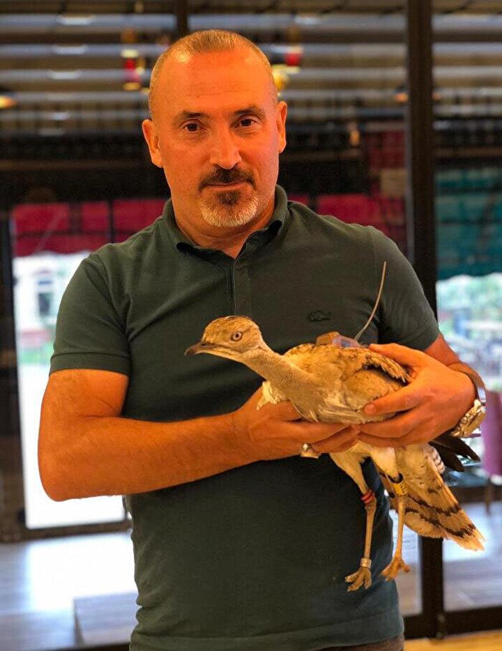 Yakalı toy kuşu, kedilere yem olmaktan kurtarılarak kuş gözlemcileri aracılığıyla Doğa Koruma ve Milli Parklar Şube Müdürlüğü ekiplerine teslim edildi.