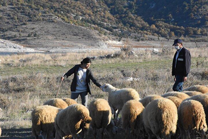 """34 KOYUN 40 TANE KUZULADI  Hibe projesi sayesinde kendi ayakları üzerinde duran ve hayvancılığı geçim kaynağı olarak yapmaya başladığını ifade eden Serpil Büyükköse, """"Başvurduğum projede hibe sadece köyde bana verildi. Koyunları aldık, 40 tane kuzusu oldu. Bu 40 kuzunun 30 tanesini sattım. Geriye 10 tanesi kaldı..."""