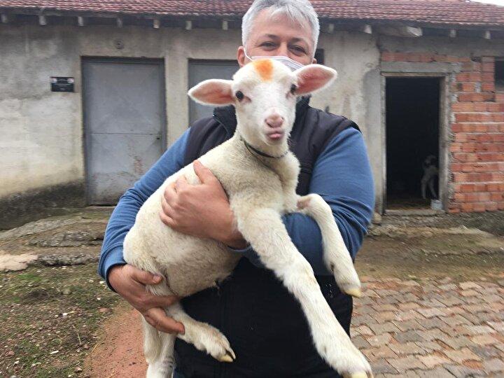 Güneş, yeni doğmuş kuzuyu boynundan yaralanmış halde kurtardı. Güneş kuzuyu kent merkezinde bulunan bir veteriner kliniğine götürüp tedavi ettirdi.