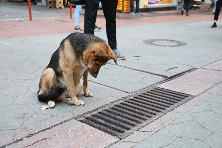 İzmit'in en işlek caddelerinden olan Fethiye Caddesi'ne her gün gelerek mazgallara bakan köpek, hem vatandaşların hem de esnafın ilgi odağı oldu. Her gün akşam saatlerine yakın caddeye gelen köpek tüm mazgalları gözleyerek, dakikalarca kıpırdamadan mazgalların içine bakıyor.