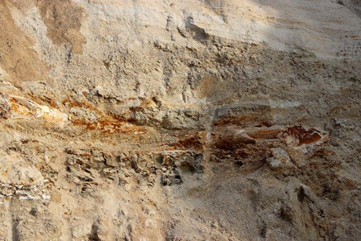 Daha sonra yapılan incelemede kemiklerin 8 milyon yıl önce, Geç Miyosen döneminde yaşamış bir mamuta ait fosiller olduğu ortaya çıktı.