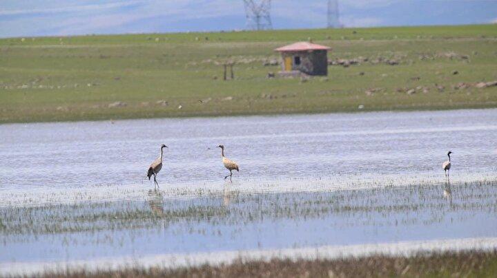 Pompa ile saniyede 27 litre suyun göle verildiğini anlatan Gök, Yöre halkı evcil hayvanlarının susuz kalmaması için önlem aldı. Evcil hayvan su yalaklarının sayısı iki katına çıkartıldı ve gölü besleyen tek doğal su kaynağının dere ıslahı Kars Özel İdaresi tarafından yapıldı. Göl suyuna kanalizasyon karışmaması için Kuyucuk köyünün kanalizasyon hattı bakıma alındı ve 300 ton kanalizasyon atığı taşındı. diye konuştu.