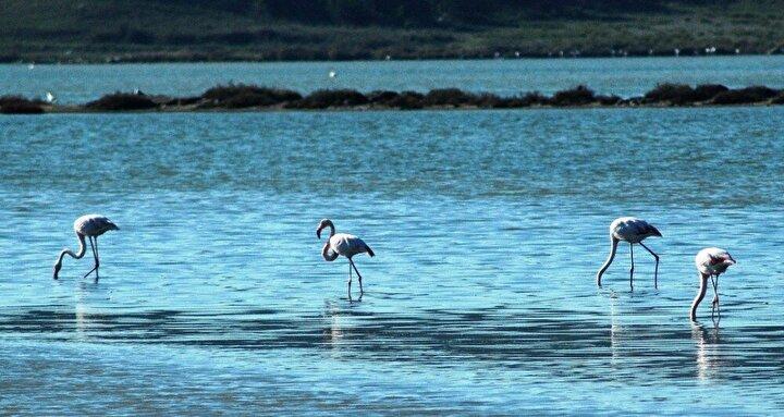 Göç yolları üzerinde bulunan ve yaklaşık 50 çeşit balık ve 40 çeşit kuş türüyle zengin yiyecek deposu olan Tuzla sulak alanı flamingoların yanı sıra pelikan, boz ördek, balıkçıl, bataklık ve kırlangıç gibi değişik kuş türlerine ev sahipliği yapıyor.