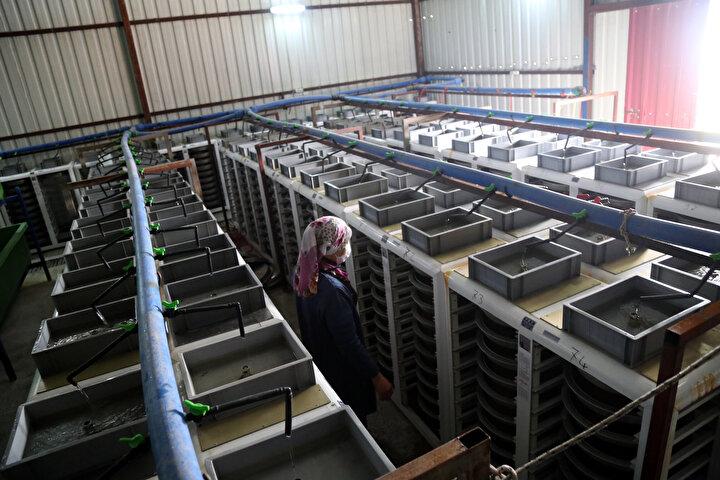 Birecik ilçesinde Karkamış Barajının su toplama havzasında kurulan alabalık çiftliklerinin sayısı her geçen gün artıyor.