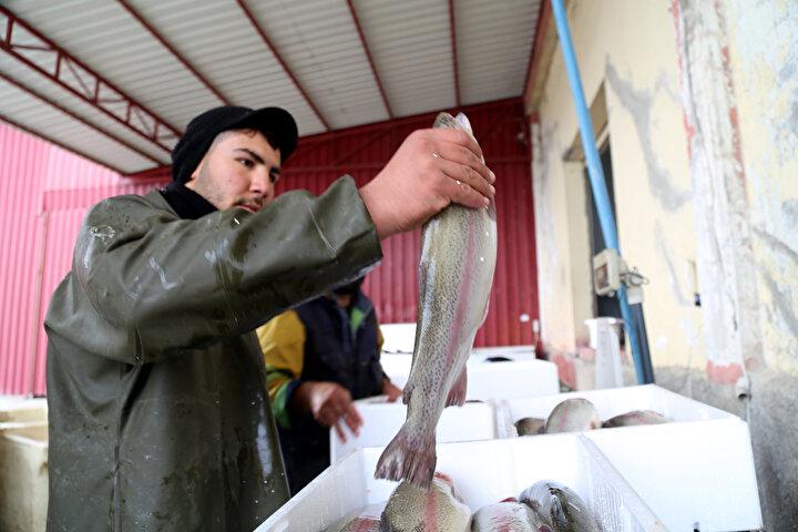 Fırat Nehri Havzasının balık yetiştiriciliğine çok uygun olduğunu belirten Akkaya, Alabalık yetiştiriciliği Türkiyenin birçok bölgesinde yapılıyor fakat alabalık soğuk suyu seviyor. Türkiyede alabalık yetiştiriciliğinin yapıldığı bölgelerden yüzde 80i yazın suyu ısınan barajlardan oluşuyor.
