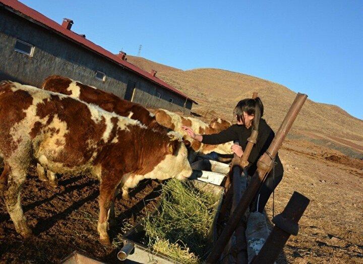 Erzincan'ın Tercan ilçesine bağlı Gevenlik köyünde 12 yaşındaki Işıl Su Ece Ergül, babasının verdikleri harçlıklarla 3 adet bu sene dünyaya gelen dişi buzağı aldı. Hayvan sevgisi ve veteriner olma arzusuyla çiftçiliğe atılan Işıl Su Ece Ergül, bölgenin en genç çiftçisi unvanını aldı. Pandemi sürecinde online derslerden arta kalan zamanın büyük bir bölümünü buzağılarla ilgilenerek geçiren Işıl Su Ece Ergül'e Tercan İlçe Tarım ve Orman Müdürü Emre Özelgül ziyarette bulundu.