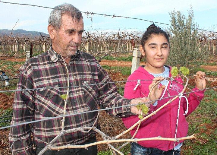Çiftçiler kış ortasında asmaların filiz açmasının normal olmadığını filiz açan asmalardan üzüm alınamayacağını söyledi.