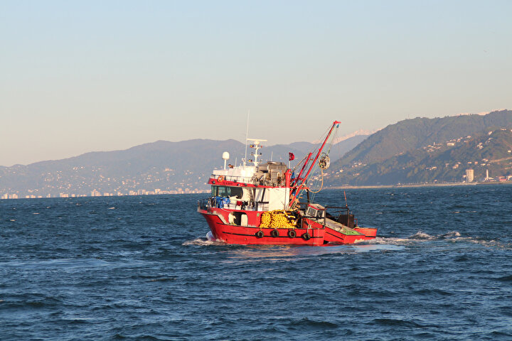 Karadeniz'de hamsi avına 10 gün yasak getirildi