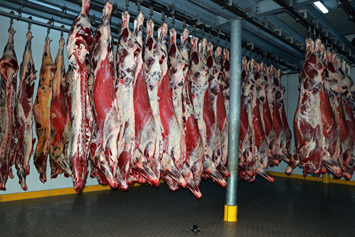 Aynı zamanda işletmelerde stoklarda birikimler yaşandı. Yüzde 70'lik düşüş sıcak ticarete yansıdı. Örneğin geçen yıl 100 ton kırmızı et siparişi veren bir üniversite 2020 yılında 30 ton et aldı. Kilogram maliyeti 38 lira olan karkas etin piyasada 34-35 lira olması besiciyi sıkıntıya soktu. Eğer fiyatlar kilogram başına 41-42 lirayı bulursa üretici biraz olsun rahatlayabilir.
