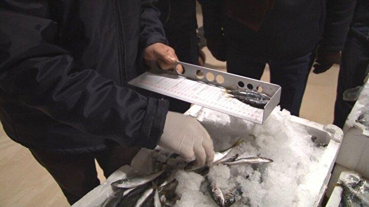 Ekipler, balık boylarını kontrol ederek, ölçülere uymayan 1 ton balığa el koydu. Ocak ayında şu ana kadar, standartlara uymadığı için Gürpınar Su Ürünleri Hali'nde 6 tonu aşkın balık çeşidine el konulduğu bildirildi.