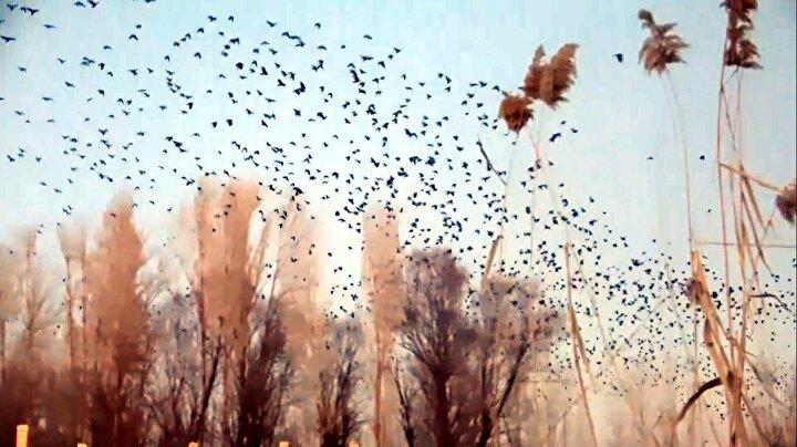 Geçmiş yıllara göre kurak bir kış geçiren Kasımbağı Mahallesi sakinleri ekinlerinden dolayı da büyük endişe yaşıyor.
