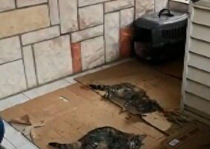 Kedinin tedavisini yaptırdıktan sonra yeniden siteye dönen Yaşat, diğerlerinin de yerde yattığını görünce hemen veterineri aradı. Veterinerin müdahale ettiği kedilerden 17si telef oldu, 3ü ise tedaviye alındı. 5 kedinin ise kayıp olduğu belirtildi.