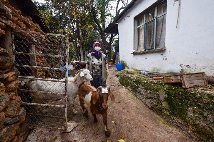 Keçilerle günümü geçiriyorum. Kurbanlıkları, keçi sütlerini satıyoruz. Ete para vermeden, ihtiyaç olduğunda kesip yiyoruz. İki çocuğumu okuttum. Büyük çocuğum evlendi. Hem anne hem çoban olmak bazen çok güzel. Bunun gururunu yaşıyorum. Yatta, katta gözüm yok. Yıllardır her yer bina oldu ama evim bana yetiyor.