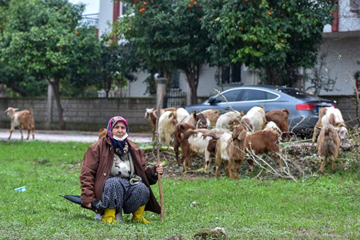 HER YER BİNA OLDU AMA EVİM BANA YETİYOR  İlerleyen yaşına rağmen keçilerini otlatırken zorluk çekmediğini anlatan Menşure Albayram, kendisini görenlerin zaman zaman Çok iyi yaşıyorsun diye şaka yaptığını, kimisinin de hatıra fotoğrafı çektiğini söyledi.